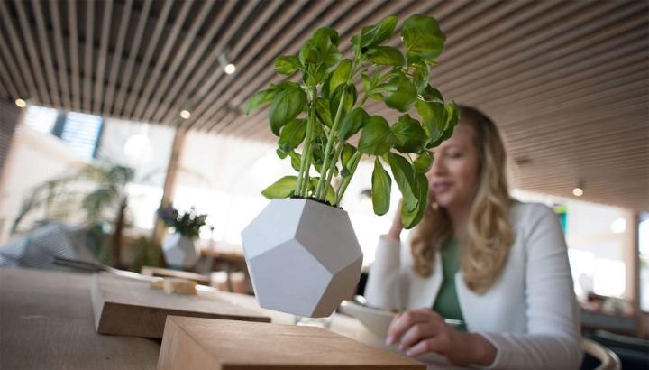 LYFE - Nulla gravitációs lebegő növények